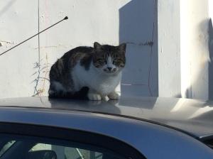 Car cat.