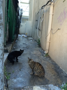 alley cats.
