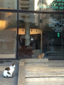 cats waiting for the museum to open.