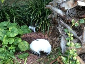 garden cats.