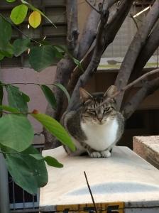 garden cat.