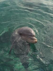 Flipper.