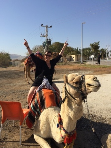 camel rides by the dead sea